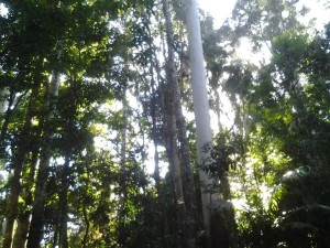 Mount Tamborine Rainforest